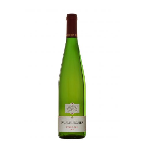 Pinot Gris - Paul Buecher